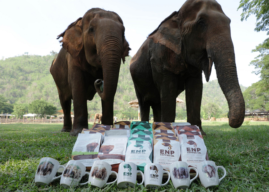 Lazada partners with Elephant Nature Park to offer virtual tours via its livestreaming technology